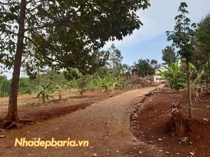 2 mẫu đất láng lớn trông cây ăn trái