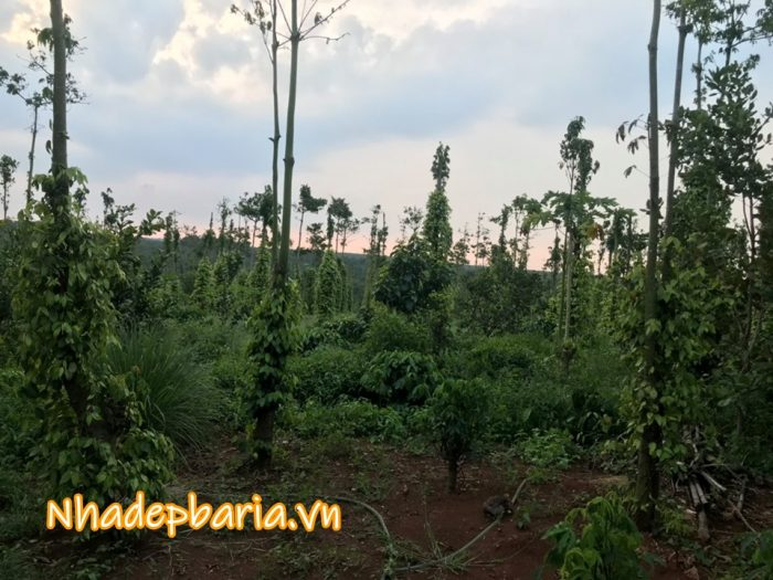 Đất vườn xã quảng thành châu đức 1000 m2 giá rẻ